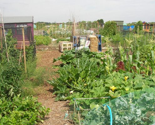 Hale Road Allotments