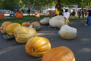 Big pumpkins